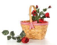 Basket of Roses Stock Photography