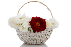 Basket of Roses Royalty Free Stock Photos