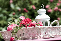 Basket with roses Royalty Free Stock Image