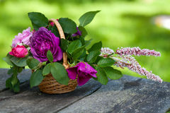 Basket of roses on garden table Stock Photography