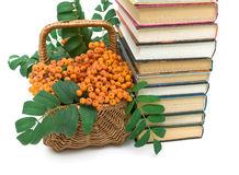 Basket with rowan berries and books closeup. white background. Stock Images