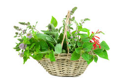 Basket with sage and mentha Royalty Free Stock Images