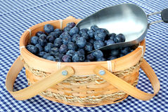 Basket and Scoop of Blueberries Royalty Free Stock Photography