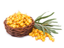 Basket with sea-buckthorn berries Stock Photo