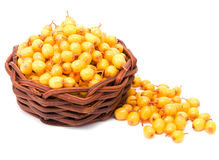 Basket with sea-buckthorn berries Stock Image