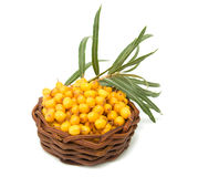 Basket with sea-buckthorn berries Stock Photography