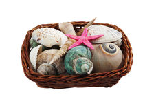 Basket of sea shells Stock Photo