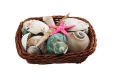 Basket of sea shells Stock Photo