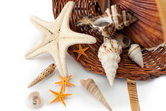 Basket with seashells. Royalty Free Stock Images
