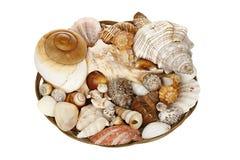 Basket of seashells Stock Images