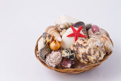 Basket with seashells Royalty Free Stock Photography