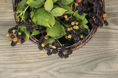 Basket of Seasonal Berries Stock Image