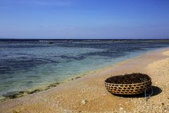 Basket with seaweed on the coast, Nusa Penida, Indonesia Royalty Free Stock Image