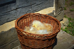 Basket Sheeps Wool Stock Images