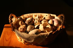 Basket of shells. A basket of shells with natural light coming from a west window stock images