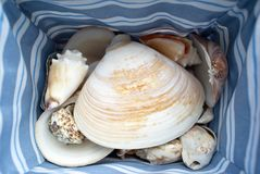 Basket of Shells Stock Photography