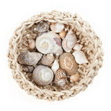 Basket with shells Stock Photos