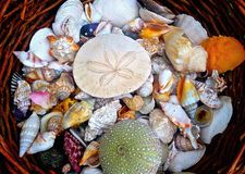 Basket of shells in garden Stock Photos