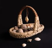 Basket with shells Stock Image