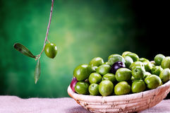 Basket of sicilian green olives Royalty Free Stock Photos
