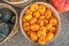 Basket of small pumkins Royalty Free Stock Images