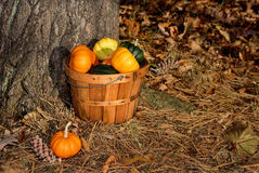 Basket of small pumpkins Stock Photos
