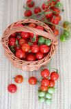 Basket with small red and green cherry tomatoes on a branch royalty free stock image