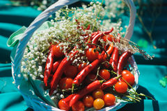 Basket with small tomatoes and peppers Stock Image