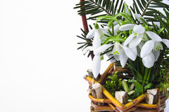 Basket of snowdrops Stock Photography