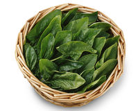 Basket of spinach leave Royalty Free Stock Photo
