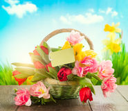 Basket of spring colorful tulips Stock Photography