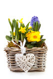 Basket spring flowers Royalty Free Stock Photography