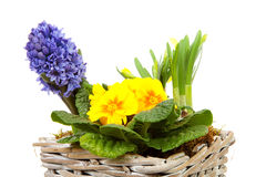 Basket spring flowers Royalty Free Stock Images