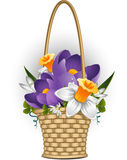 Basket of spring flowers Stock Photography