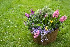 Basket with spring flowers in the garden Royalty Free Stock Photography