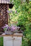 Basket of spring lilacs on vintage bureau in spring garden Stock Photo