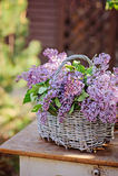 Basket of spring lilacs on vintage bureau in spring garden Royalty Free Stock Photos
