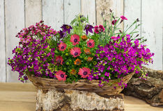 A basket with springtime flowers. Decorated with wood Royalty Free Stock Images