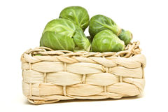 Basket of Sprouts Stock Image