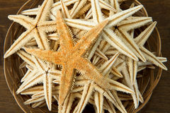 Basket with starfish Royalty Free Stock Images