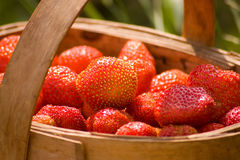 Basket of the strawberries Royalty Free Stock Photography