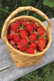 Basket of the strawberries. The birch bark basket with red strawberries Stock Images