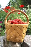 Basket of the strawberries. The birch bark basket with red strawberries Stock Photo