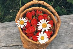 Basket of the strawberries. The birch bark basket with red strawberries Royalty Free Stock Photos