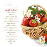 Basket of strawberries Royalty Free Stock Photography