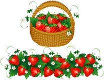 Basket of strawberries. And background with berries Stock Photo