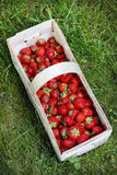 Basket of strawberries on grass Stock Photos
