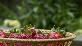 Basket Strawberries green Royalty Free Stock Photography