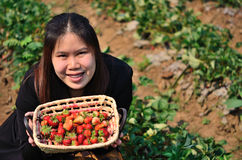 The basket of strawberries in the hand Royalty Free Stock Photo
