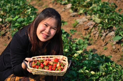 The basket of strawberries in the hand Stock Photos